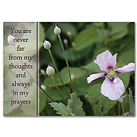 Thinking Of You Friendship Cards Buy Caring Hoping Praying
