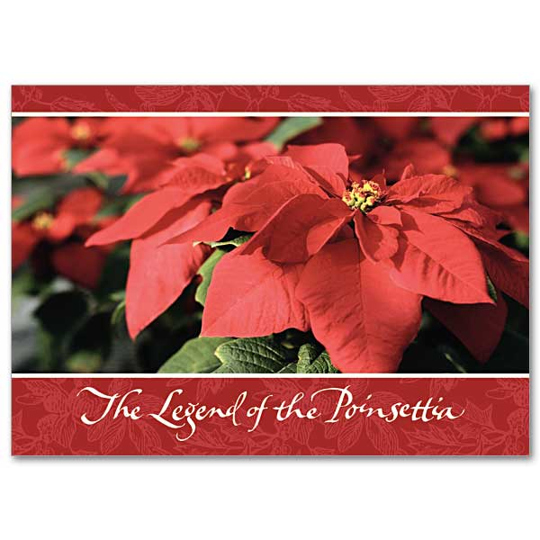 photo about The Legend of the Poinsettia Printable Story referred to as Legend of the Poinsettia: Wonder of Xmas Card